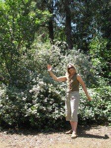 Mature bush mallow offers long-term nectar