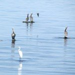 We stopped by the Salton Sea and saw pelicans and egrets.