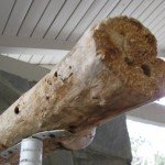 Carpenter Bee nesting holes in parrot perch