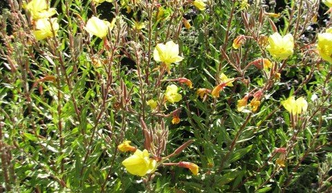 Great Hikes: Caroline Park's Lush Natives       (Redlands CA)