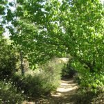 The Trees of our Valley Trail