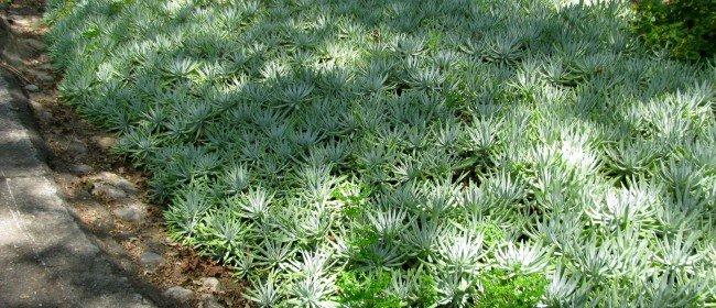 Favorite So. California Native Plants
