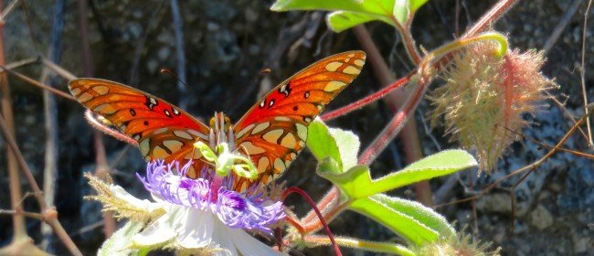 Butterfly Update! Including Monarchs from our Yard and Mexico butterfly photos