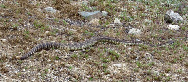 Wildlife Aplenty on an Hour Walk at Wildwood Canyon State Park