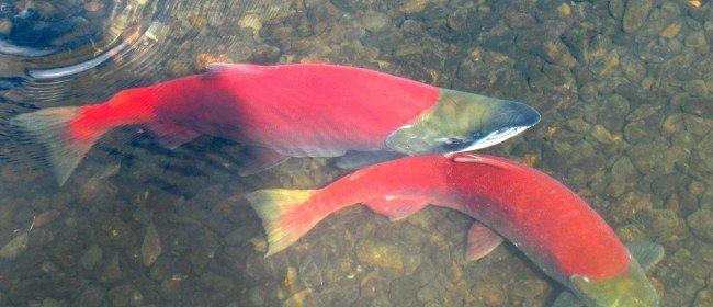 Alaska's Nature Speaks Loudly