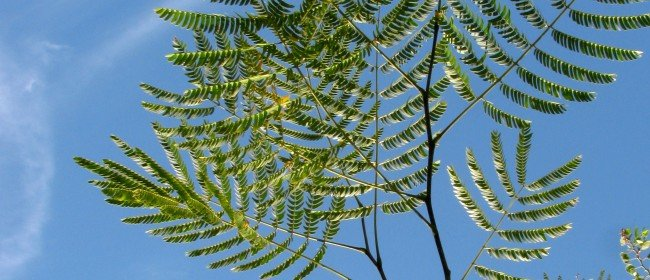 What a Plant Knows: Do they Feel or Hear?