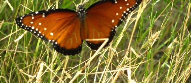 Pollinator killing plants: questions to ask nurseries