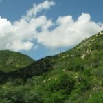 Hillsides of native vegetation outside Cabo