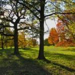 Autumn at Morton Arboretum, IL