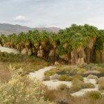 The dunes of the Coachella Valley's McCallum oasis