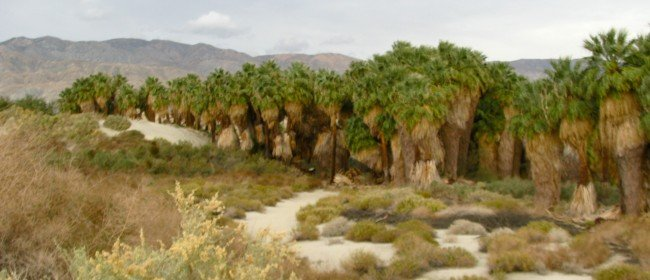 Great hikes: Coachella Valley's McCallum Trail