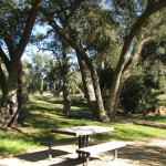Many great picnic spots to choose from