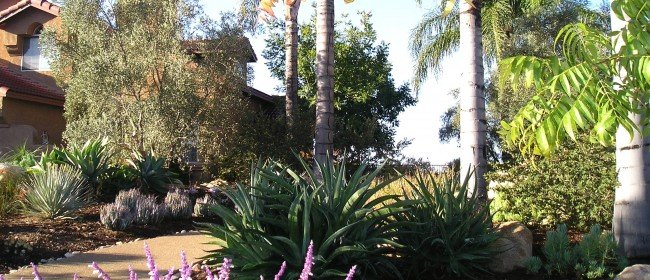 More examples of drought tolerant landscapes