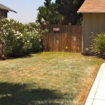 """Before photo of the side yard."