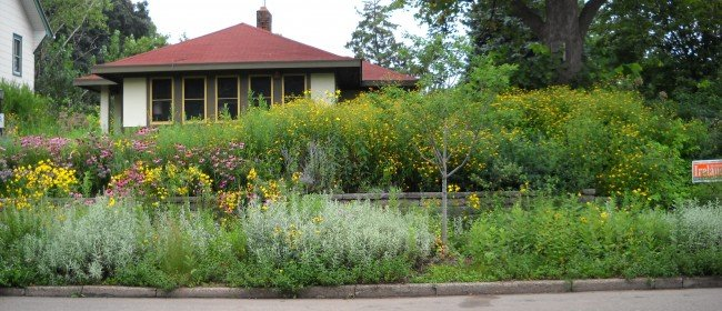 Landscaped Yard Ushers in Butterflies and Birds