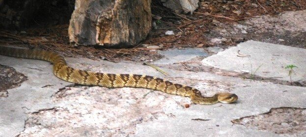 More on Relocating Rattlesnakes – including a research bibliography