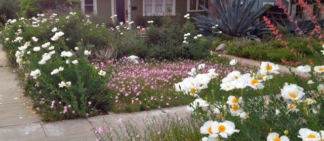 Converting Lawns to Waterwise Landscapes: So CA examples