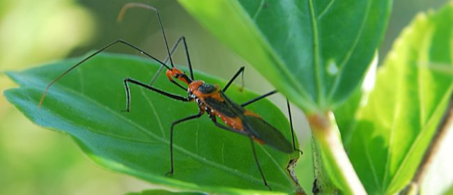 Tapping Beneficial Insects to Combat Pests (Part 2)