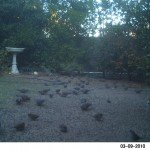 Mourning dove and other wild birds