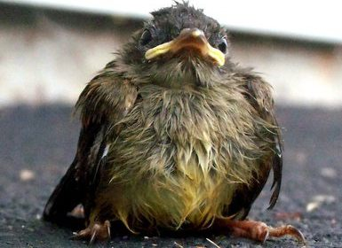 Does this Baby Bird Need Rescue?
