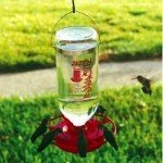 The Best Hummingbird Feeder is available online and at many bird stores