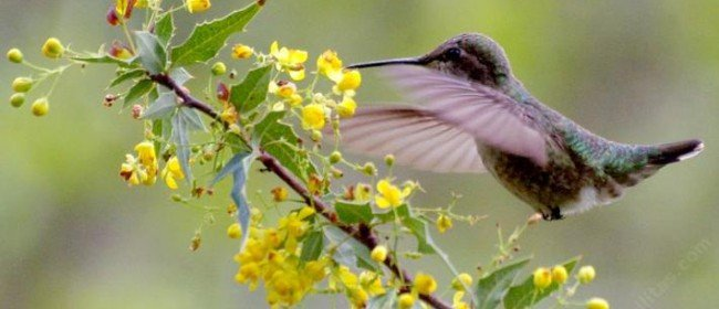 For the Love of Hummingbirds