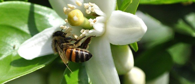 Pesticide Use: Consider the Collateral Damage